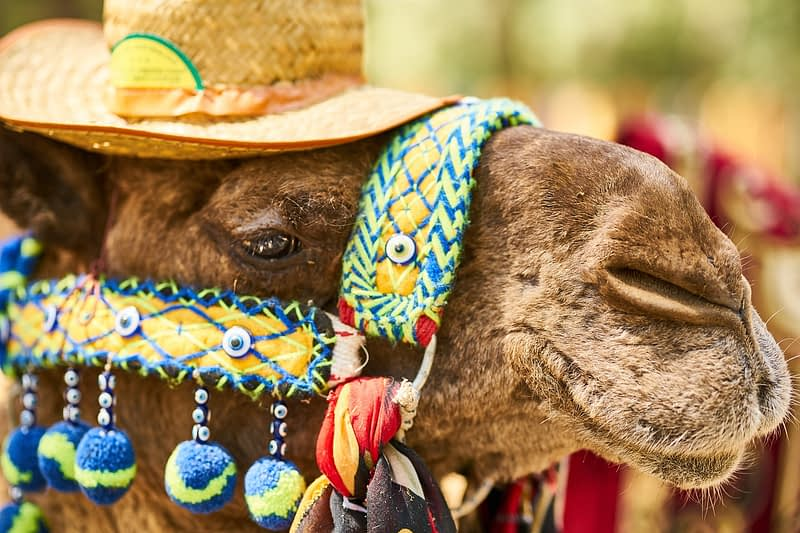 Camel Tourism Hat Cute Funny